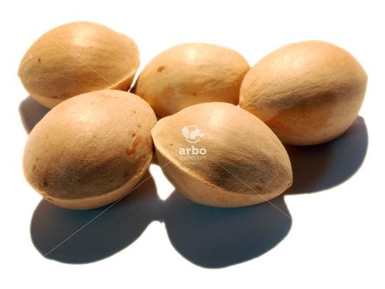 Acheter Ginkgo Biloba - Mieux se concentrer grâce aux huiles essentielles Bio ...